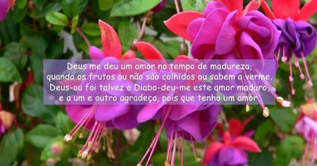 Carlos Drummond de Andrade – Campo de Flores